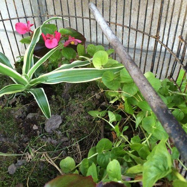 hh_blog_shallow_planter_shade55