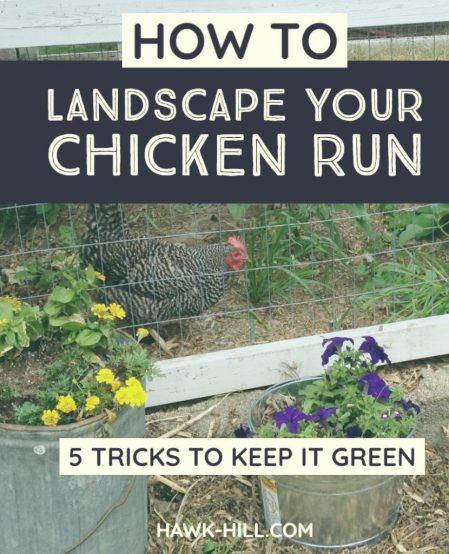 LANDSCAPE CHICKEN RUN - How to