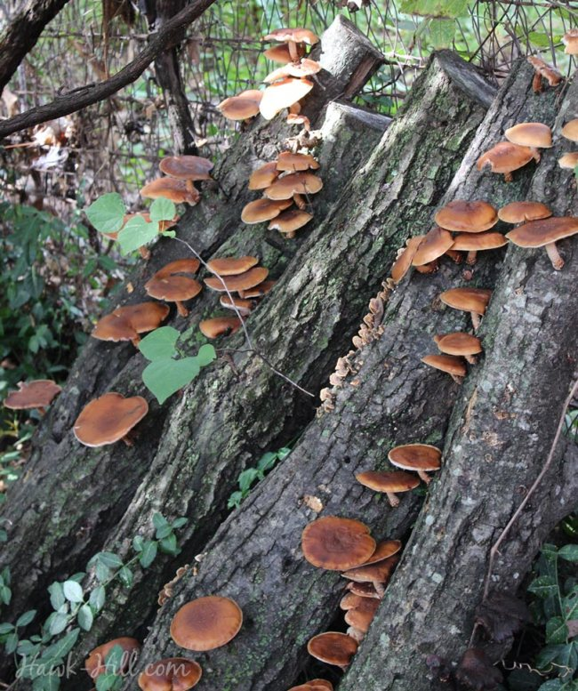 mushroom shade garden in the middle of a summer fruiting