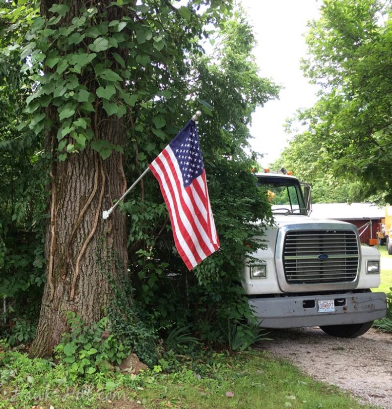 flag mounted on tree