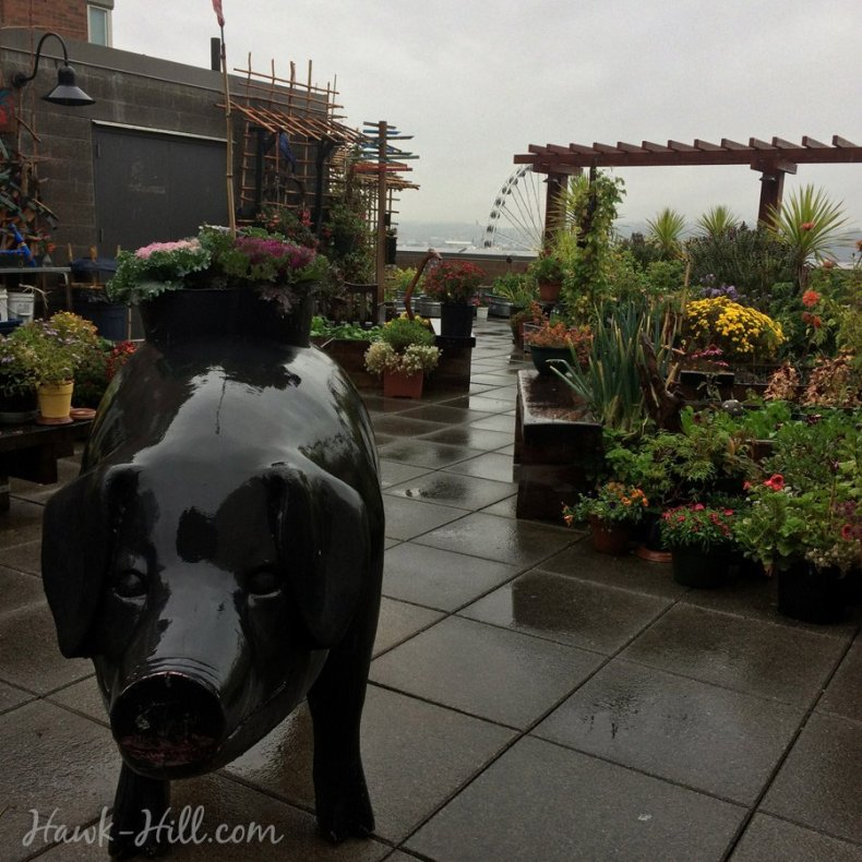 pike_place_roof_garden_fall_october