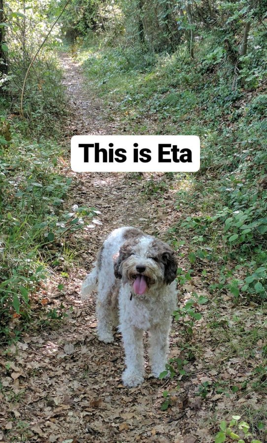 AirBnB's Truffle Hunting Experience Dog