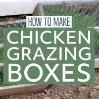 Build these Chicken Grazing Boxes and Grow Fresh Greens in your Chicken Run Year Round