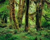 יער גשם