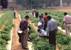חווה ישראלית בהודו. צילום: מתוך אתר משרד החוץ