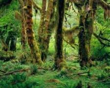 יער גשם, מתוך ויקיפדיה