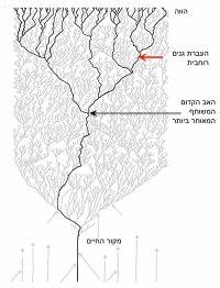 אלמוג החיים של דרווין על פי גוגרטן וגופנא: שושלות היצורים החיים היום (בשחור) נובעות כולן מאב קדום אחד (חץ שחור). אבל האב הקדום הזה לא חי לבדו. סביבו חיו מינים רבים אחרים שנכחדו (קווים אפורים). ואולם, העברת גנים רוחבית (חץ אדום) אפשרה לגנים שלהם לשרוד והגיעה עד ימינו. משמעות הדבר היא שלמנגנונים תאיים שונים בגופנו, כמו למשל הריבוזומים והאנזימים המייצרים ATP, יש אבות קדומים שונים ונכחדים, שלא חיו באותם מקומות ובאותם זמנים כמו האב הקדמון המשותף לנו ולכל עולם החי.
