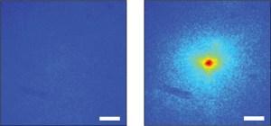 """עוצמת הפלואורסנציה שיוצר הבזק אור העובר דרך פיסת עצם בעובי חצי מ""""מ - (משמאל) לפני הפעלת האלגוריתם הממקד את עוצמת האור בנקודה אחת, (מימין) ואחרי הפעלת האלגוריתם"""