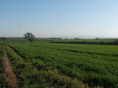 שדה חקלאי. מתוך ויקיפדיה