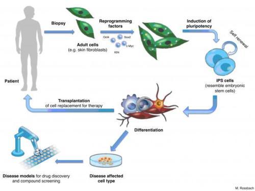 הסבר על דרך פעולת תאי הגזע המושרים. מתוך אתר Euro Stem Cells