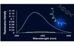 """המולקולה הפלוסצנטית ה'מאירה' בנוכחות Cyclin D1. מתוך מחקרה של ד""""ר מירב סגל"""