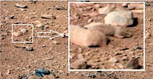 """עכבר על מאדים? צילום: נאס""""א"""