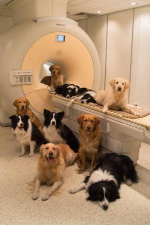 כלבים במרכז לחקר המוח בבודפשט. צילום: Borbala Ferenczy