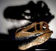 דינוזאור ממין חדש היה באורך 10 מטרים ושקל 4-5 טון. צילום: כריסטופר הנדריקס, CC-BY