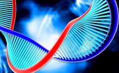 DNA. איור: shutterstock