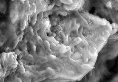 תקריב של תאי דם אדומים פוטנציאליים בתוך מאובן שנפרס באמצעות קרן יונים ממוקדת. צילום: אימפריאל קולג'