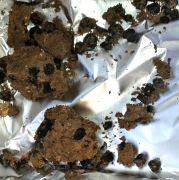 . זרעי הפול המבויתים הקדומים ביותר המוכרים בעולם שנמצאו באחיהוד. צילום: קובי ורדי, באדיבות רשות העתיקות