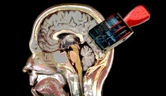 חותמת זמן של אירועים הנצרבים במוח. איור: מכון ויצמן