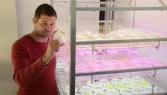 ראש המעבדה ד״ר יפתח יעקובי בוחן צלחת פטרי המכילה מיקרו אצות מהונדסות