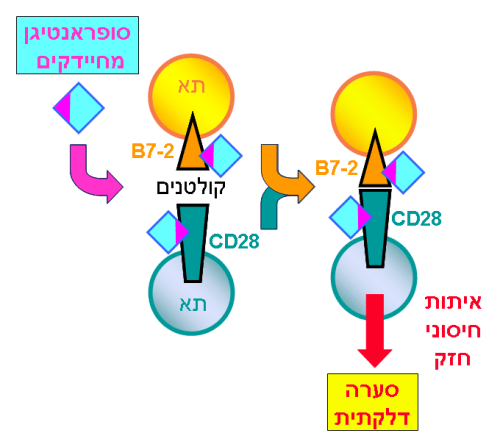 נוגדן על נגד חיידקים. איור: האוניברסיטה העברית.