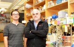 פרופ' פלויד רומסברג (מימין) ותלמיד המחקר יורקה ג'אנג שהובילו את המחקר החדש במכון המחקר סקריפס, יחד עם בריאן לאמב (לא בתמונה). צילום: מכון המחקר סקריפס (צילום: מדליין שמידט)