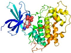 תרשים של אנזים 3-GSK. כיצד פועלות יחד מולקולות מורכבות כמו חלבונים? מקור: Boghog, Wikimedia.