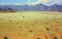 מעגלי פיות בנמיביה. מקור: Thorsten Becker.