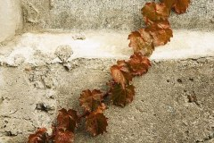 מדרגות בטון, מתוך PIXABAY.COM