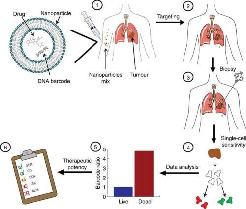 """תרשים מתוך המאמר, המציג את השיטה החדשנית שפותחה: """"אנחנו אורזים כמויות מזעריות של התרופות האנטי-סרטניות בתוך ננו-חלקיקים ייעודיים שפיתחנו. ייחודן של האריזות הננומטריות האלה בכך שהן זורמות במחזור הדם אל הגידול ושם נבלעות על ידי התאים הסרטניים. לאריזות האלה אנו מצרפים מראש רצפים מלאכותיים של DNA, המשמשים כקוראי-הברקוד של פעילות התרופה בתאים הסרטניים. לאחר 48 שעות נלקחת דגימה (ביופסיה) מן הגידול, וניתוח הברקוד מספק מידע מדויק על התאים שהושמדו (או לא) על ידי כל תרופה."""" מקור: Zvi Yaari et al., Theranostic barcoded nanoparticles for personalized cancer medicine, Nature Communications 7, 2016."""