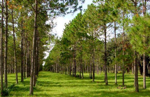 """""""חקלאות שורש"""" (Agroforestry). צילום: Jim Robinson, USDA-NRCS / National Agroforestry Center."""