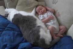 לילדים שגדלו לפחות בשנת חייהם הראשונה עם חתול היה סיכוי נמוך יותר לפתח אסתמה. צילום: Jenny Lee Silver.