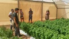 אנשי המעבדה לגנטיקה של מחלות צמחים באוניברסיטת בר-אילן וחברת זרעי ג'נסיס בוחנים את היבולים של הבזיליקום העמיד למחלת הכשותית. צילום: אוניברסיטת בר אילן