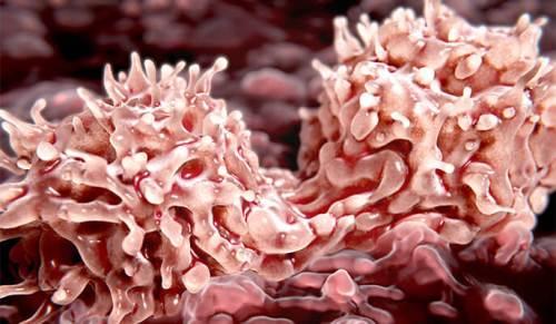 """חלוקת תאי גזע בלשד העצם. אספקה טרייה של מיליארדי תאים מדי יום. צילום: ד""""ר קארין גולן, מכון ויצמן"""