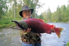 דייג תופס סלמון מהזן sockeye. צילום: מתוך PIXABAY.COM