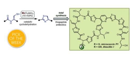 סינתזה של תיו-פפטידים בעזרת זרז מוליבדן