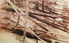 עצים שהופלו בשל פגיעת האסטרואיד בטונגוסקה ב-1908 כפי שצילמה משלחת רוסית בשנת 1929. מתוך ויקיפדיה