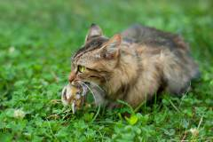 חתול צד ציפור. איור: shutterstock