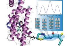 מודלים חדשים על בסיס למידה עמוקה חוזים את יחסי הגומלין בין אטומים במולקולות אורגניות. מודלים אלו יסייעו לביולוגים מיחשוביים ולמפתחי תרופות להבין מחלות ולטפל בהן ביעילות רבה יותר. באדיבות אוניברסיטת פלורידה