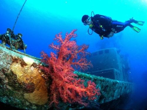 שונית האלמוגים במפרץ אילת. צילום - אילן מליסטר, המשרד להגנת הסביבה