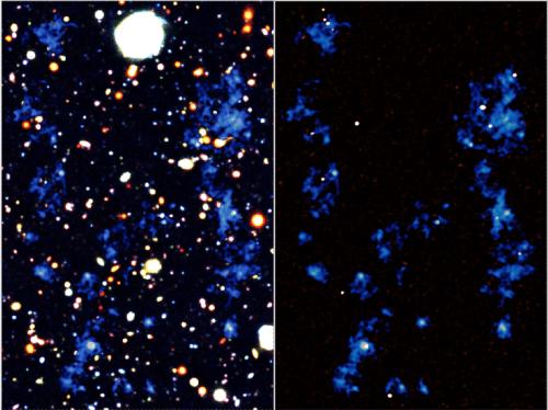 מפות של חוטי חומר הממלאים את היקום. חוטי הגז מוצגים בצבע כחול. מפות הרקע הן תמונה אופטית שצולמה באמצעות טלסקופ סובארו (משמאל) ותמונה באורך גל מילימטרי שצולמה ממצפה ALMA (מימין). התגלה קיומים של מבנים גזיים נרחבים וחוטי רשת קוסמיים (משמאל); ושהחוטים מחברים בין מספר גלקסיות שבהן יש שיעור גבוה של היווצרות כוכבים (מימין). קרדיט: RIKEN