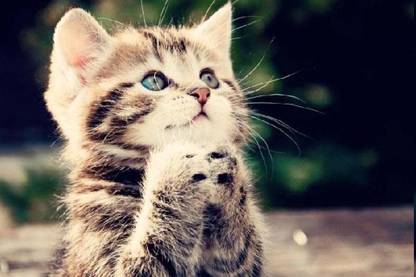 Kediler İçin Zararlı 9 Yiyecek