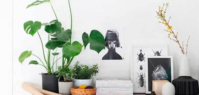 Temiz ve Sağlıklı Hava İçin Evinizde Bu Bitkileri Yetiştirin