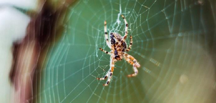 Örümcekten kurtulmak