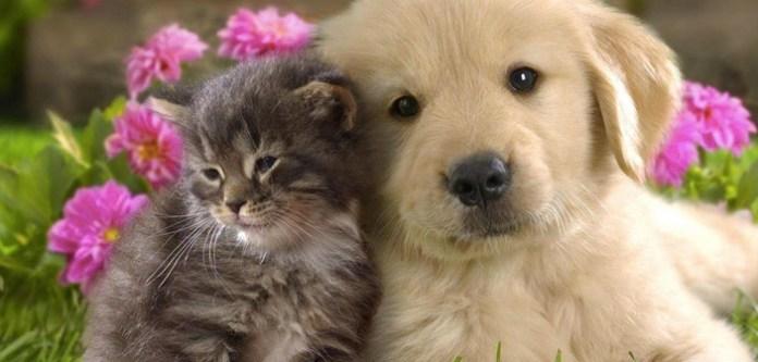 Evcil Hayvanlara Kulanılmaması Gereken Yağlar