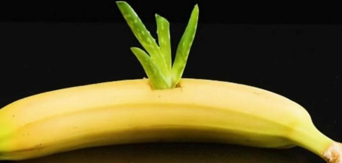 Muzun İçine Aloe Vera Bitkisi Koymalısınız