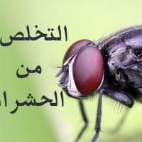 هذه هي الطريقة المثلى للتعامل مع الحشرات