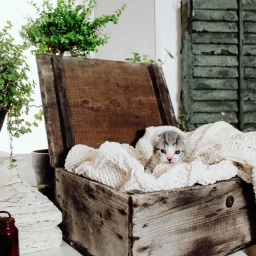 Orphaned Kitten In The Farmhouse