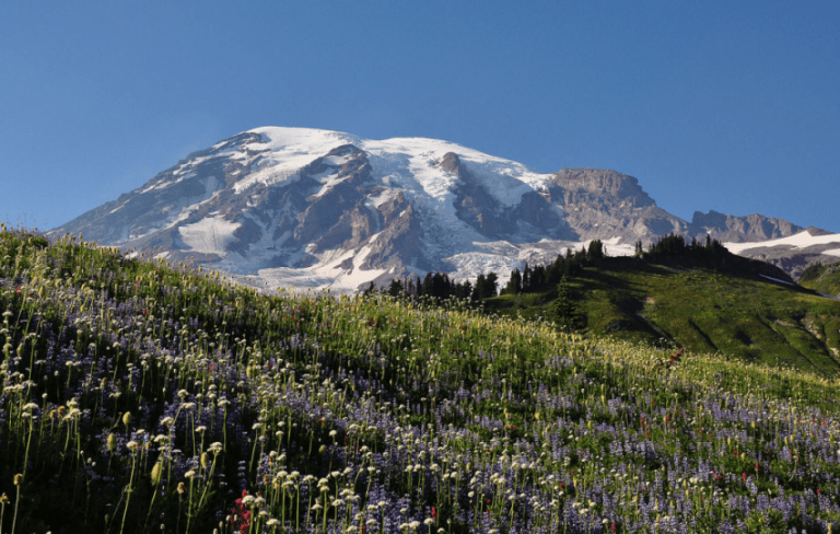 Mt Rainier in Seattle, Washington