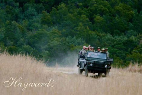 Hayward's Luxury Safaris for Executives