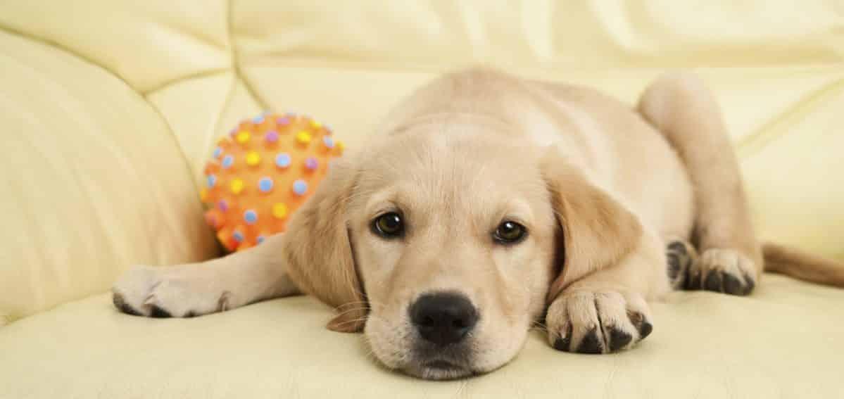 ¿Cómo quitar el olor a perro?